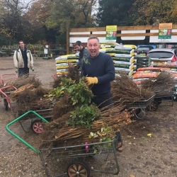 Bare Root Hedging & Fruit Trees Available Now