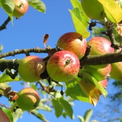 October – What to do in your garden