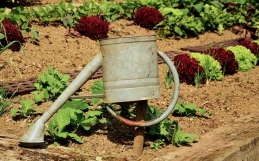 Win Goodies for your allotment