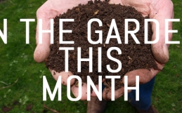 March – Jobs for your garden