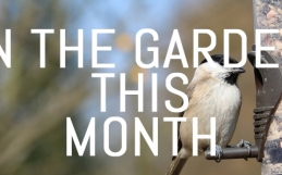 November – What to do in your garden