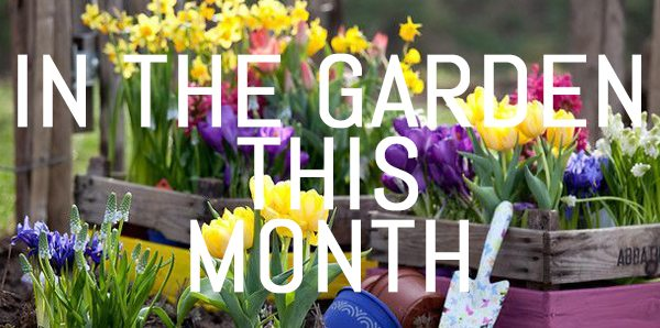 September – what to do in your garden