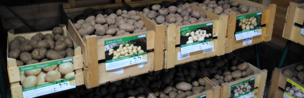 SEED POTATOES ARE IN!