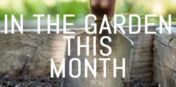 April – Jobs for your garden