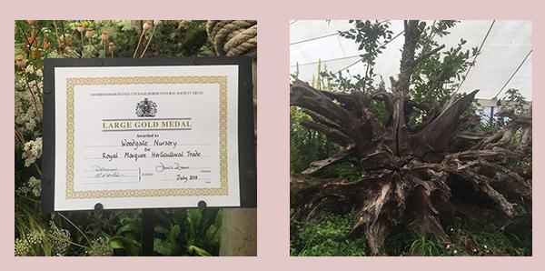 Woodgate Nursery – Woodgate Wins at the Sandringham Flower Show 2018