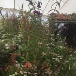 Woodgate Wins at the Sandringham Flower Show 2018