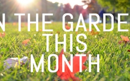 What to do in your garden in November