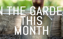 April – Jobs for your garden