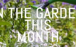 What to do in your garden in August