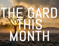 What to do in your garden in February
