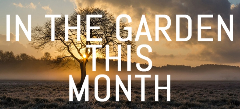 What to do in your garden in January