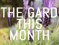 What to do in your garden in May
